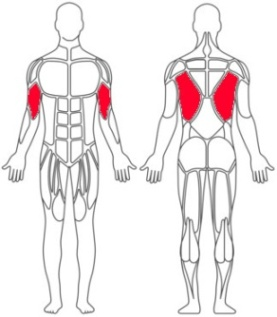 comparison-muscles-worked-pull-ups